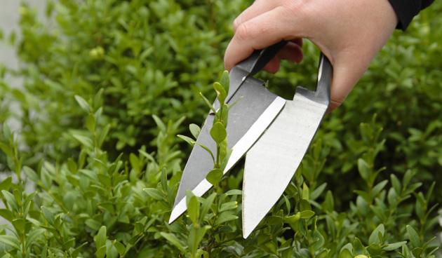 Snoeitips voor de tuin in juni tuinseizoen for Tuin snoeien