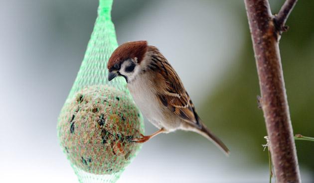 Afbeeldingsresultaat voor vogels in de winter