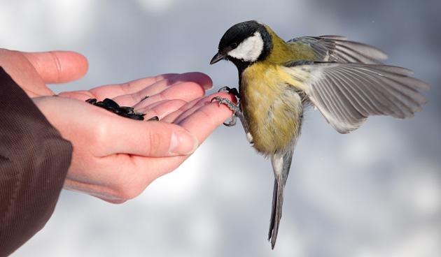vogel-voeren-winter