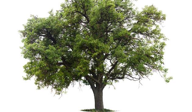 Godsdienst mind42 - Deksel van de boom ...