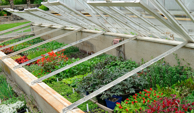 Heb je zelf gezaaide of gekochte jonge plantjes? Hard ze dan eerst af