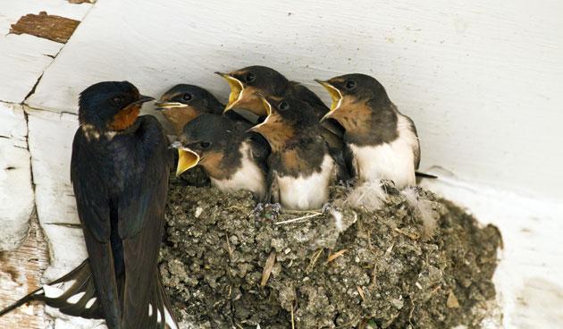 Jonge vogels vliegen uit tuinseizoen for Vliegen in de tuin