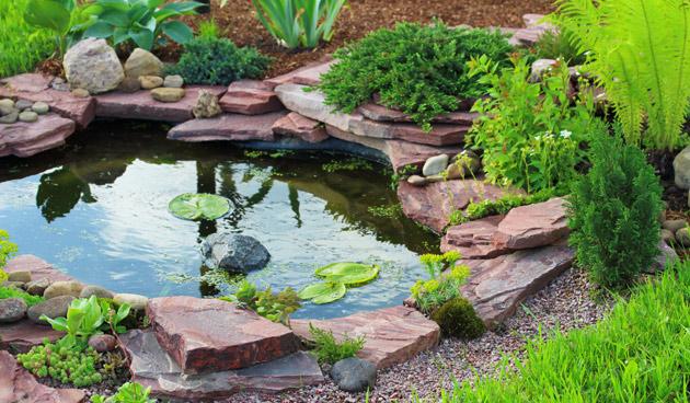 10 vragen over de vijver tuinseizoen - Bassin tuin ontwerp ...
