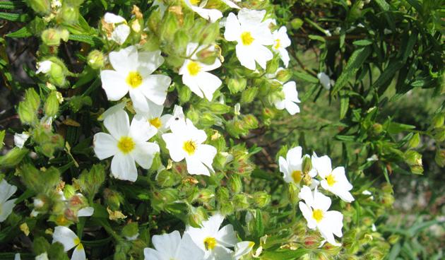 Deze planten plant je niet uit in de herfst tuinseizoen - Zoals mediterrane ...