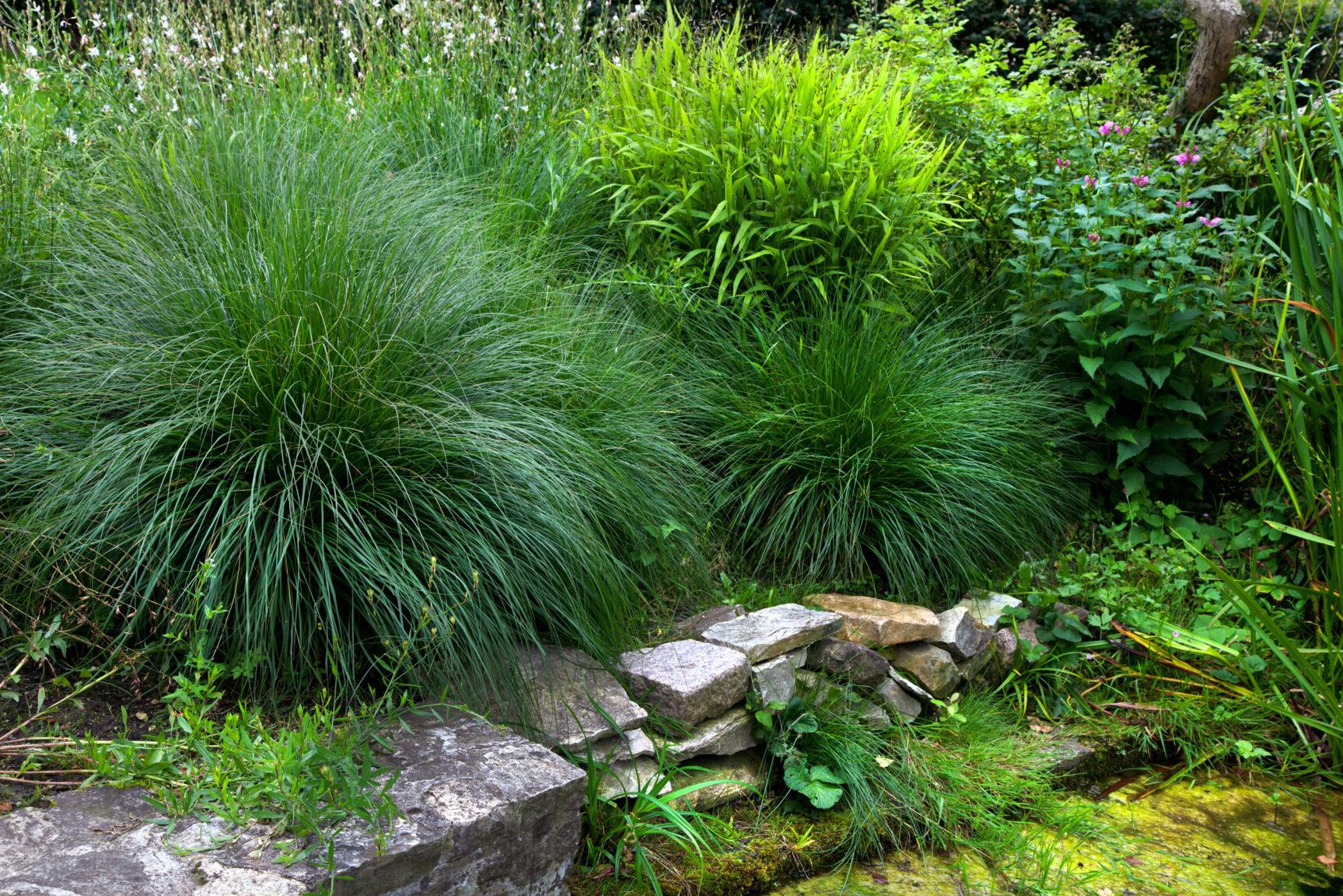 Genieten van je tuin tuinseizoen for Tuinontwerp intratuin
