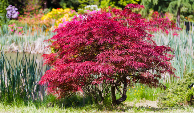 Bomen in de tuin   Tuinseizoen